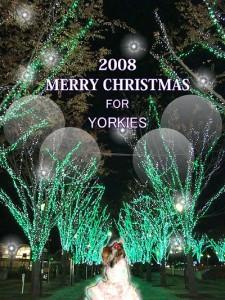 メリ-クリスマス in Tuskuba