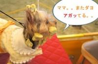 Nagiのつぶやき:ヨーキー