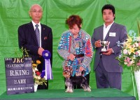 "2011.6.11岡山桃太郎愛犬クラブ展""Sujyaku"":ヨーキー"