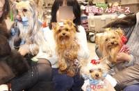 2012東京インターみんな親戚さん:ヨーキー