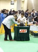 """""""Sujyaku"""" 本部展審査の様子:ヨーキー"""