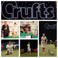 2013_Juniors Competition at Crufts.jpg