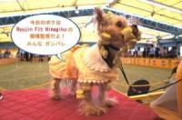 Ryujin のドッグショーデビュー