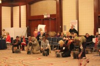 Yorkshire Terrier Club Of America, Inc.:ヨーキー