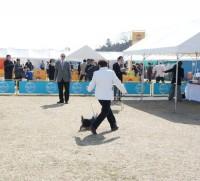 2014 北関東インター:ヨーキー単独展 関盛さん