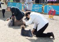 2014 北関東インター:ヨーキー単独展