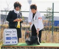 2014.3.9 大阪南白鷺ドッグクラブ展:Hakuto