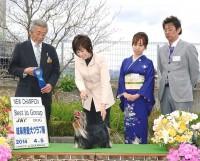2014.4.5 岐阜愛犬クラブ展:Hakuto