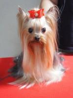 パパ犬:Ryujin