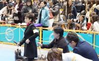 2014 東京インター CHクラス Hakuto と圭子さん Hakuto