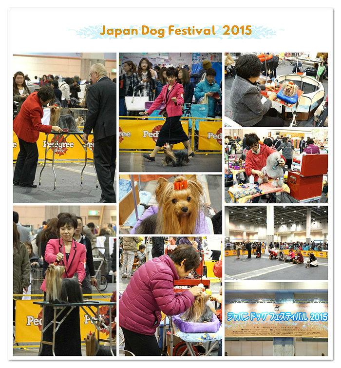 JDF2015 Team Sekimori