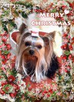『びびちゃん』からMerry Christmas